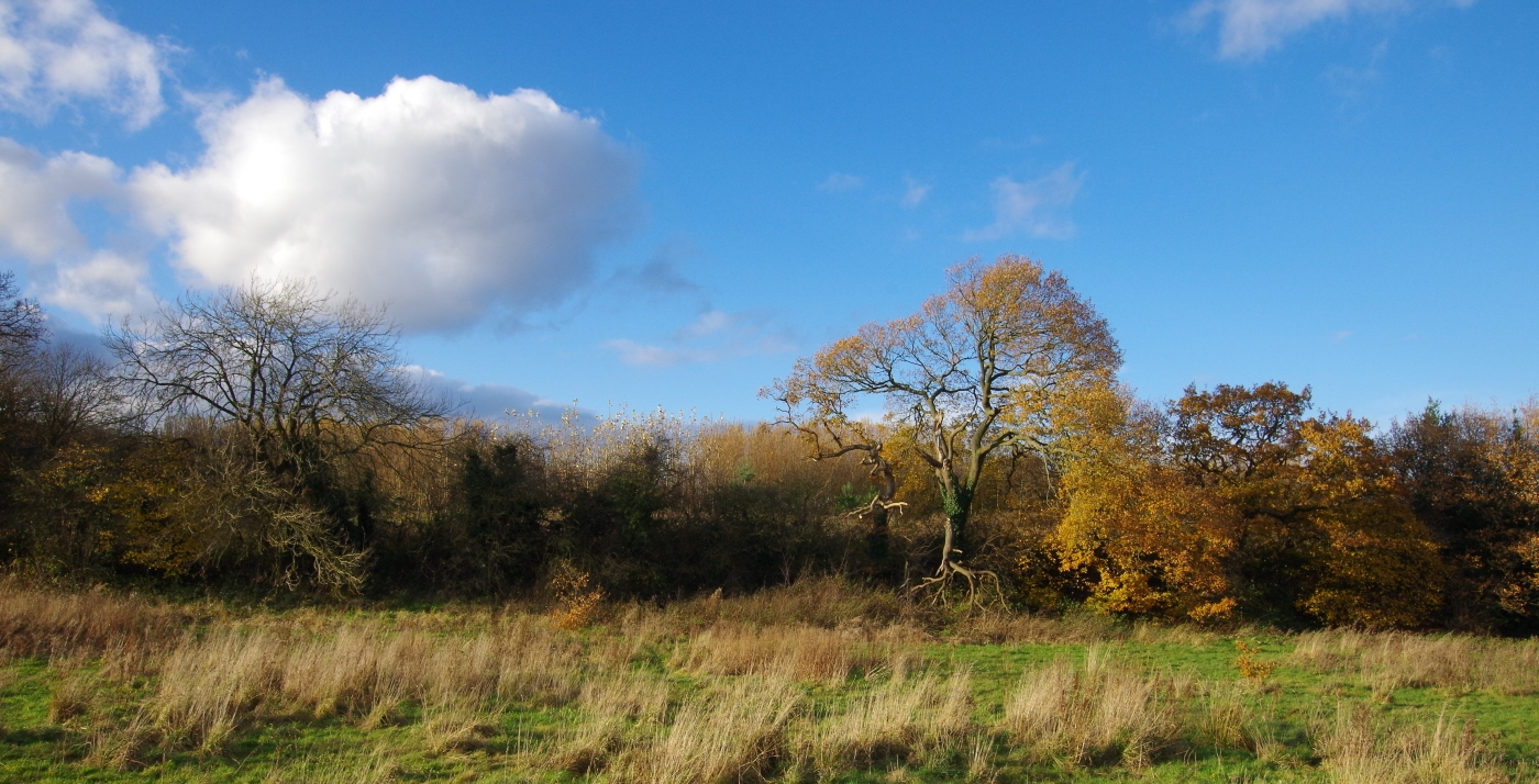 Autumnal Cheshire 2